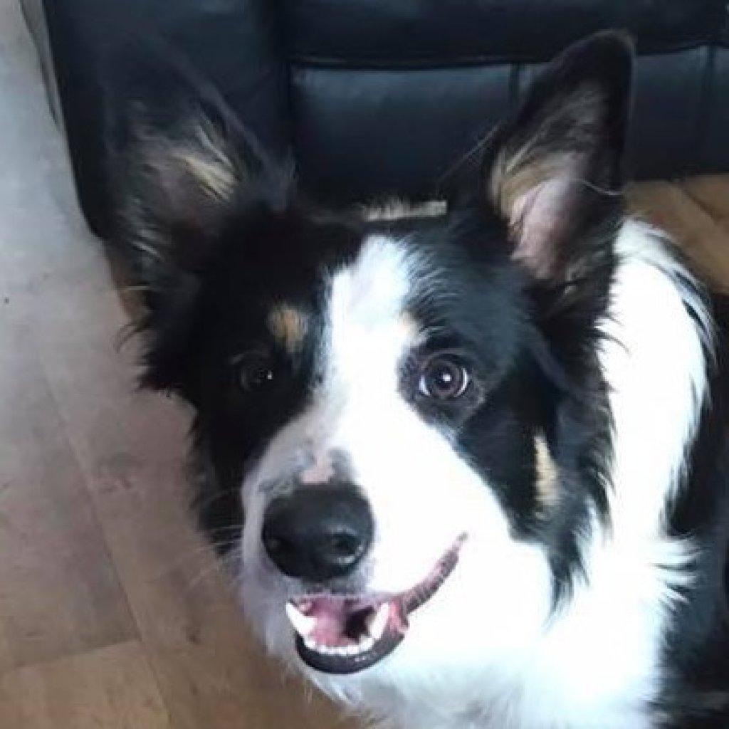 Rocco-profile