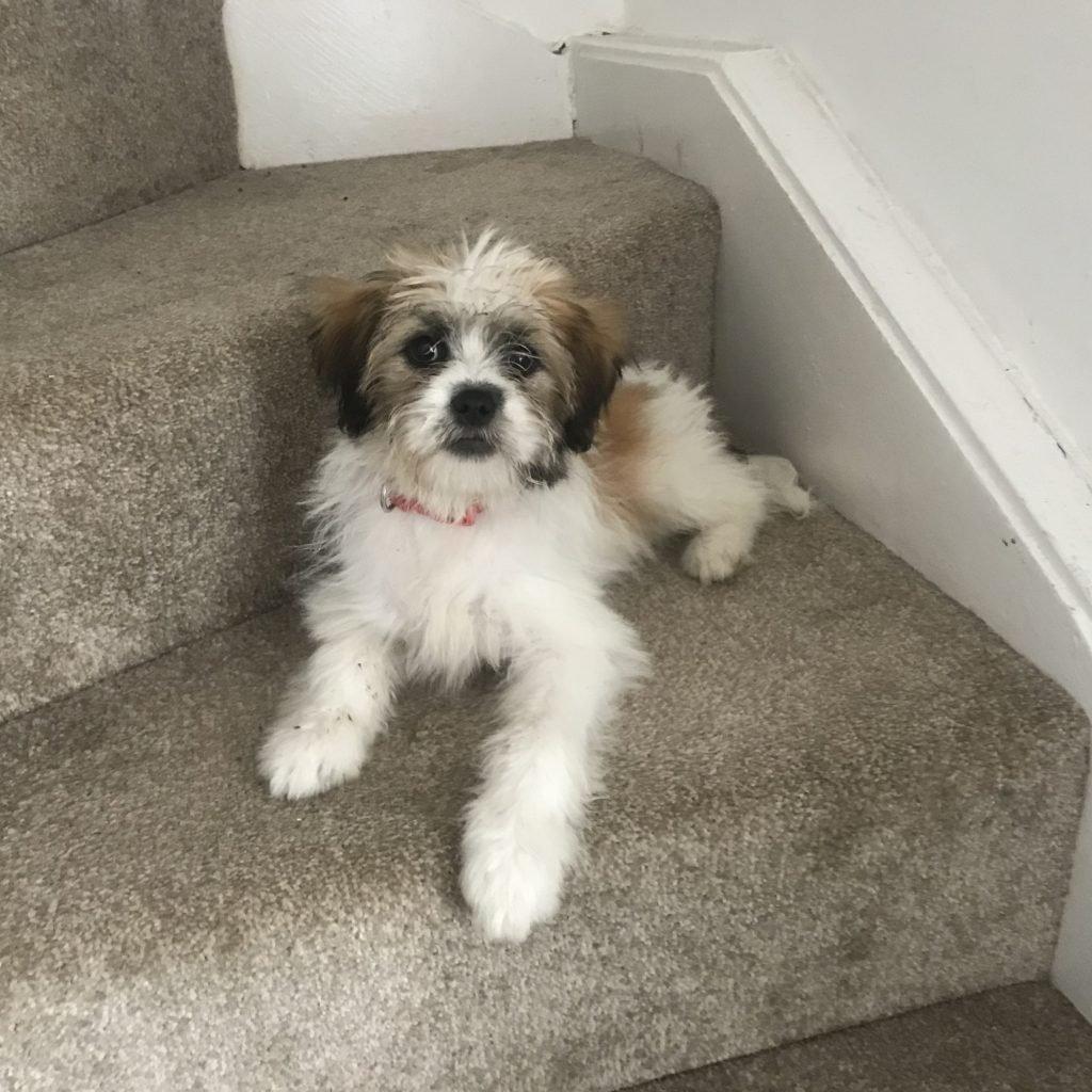 Mollie-profile