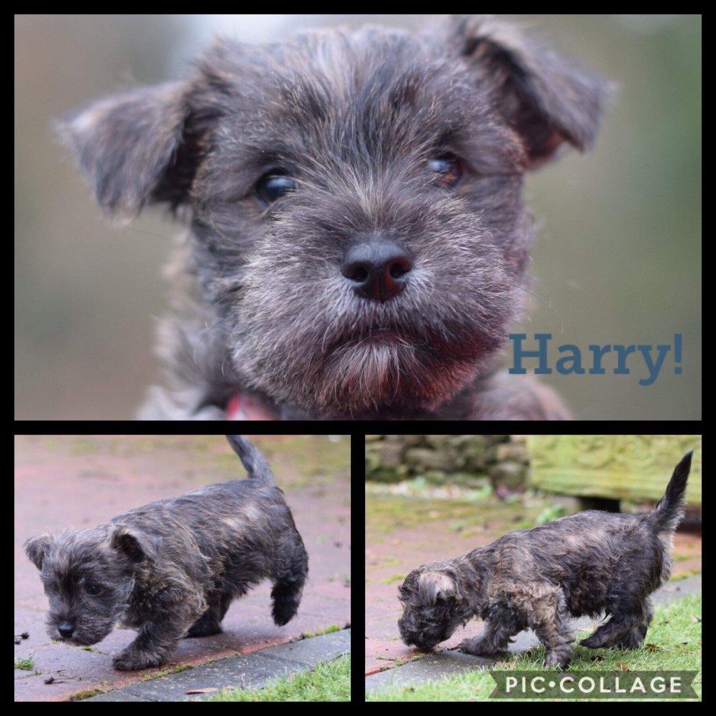 Harry-profile