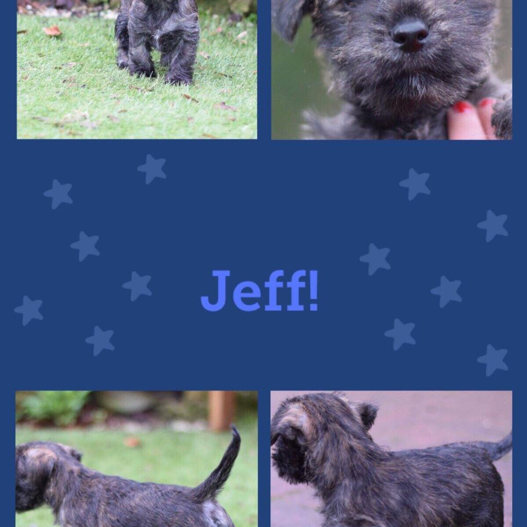 Jeff-profile