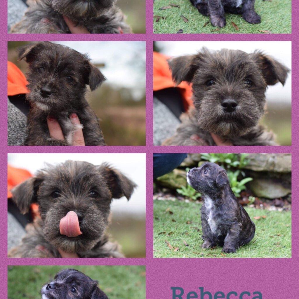 Rebecca-profile