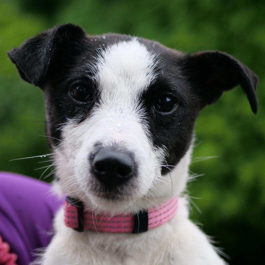 Daisy-profile