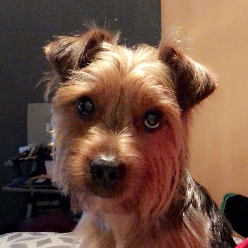 Milo-profile-1