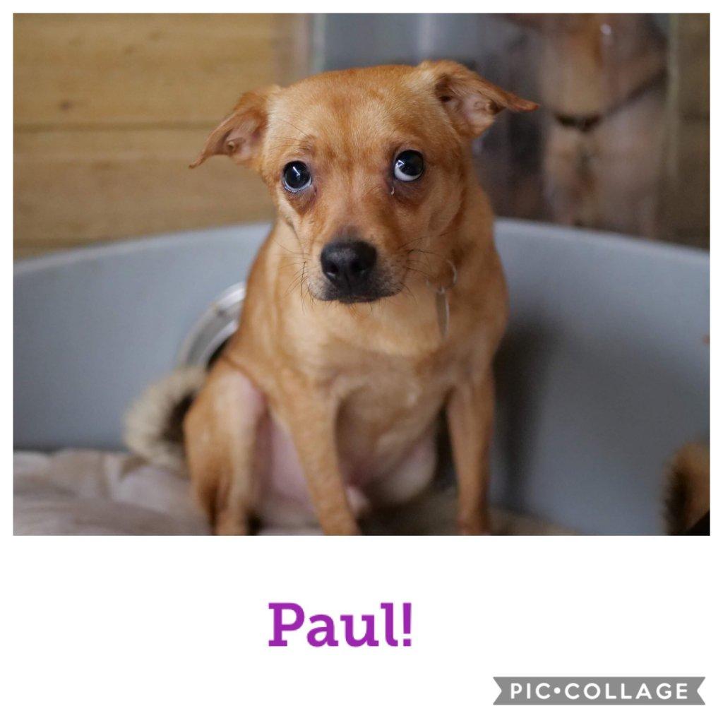 Paul-profile