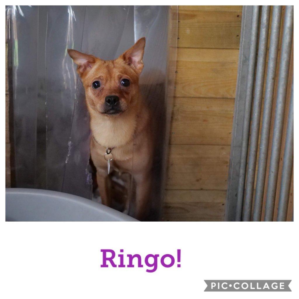 Ringo-profile