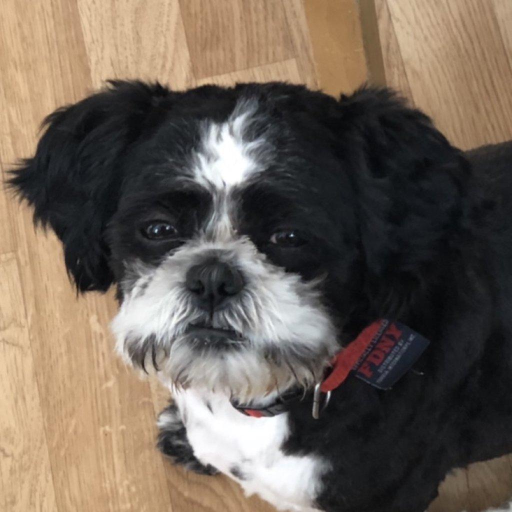 Bailey-profile-1
