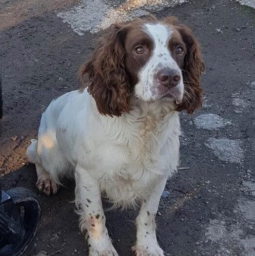 Jasper-profile-1
