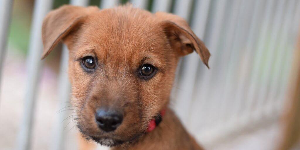 main-puppy2